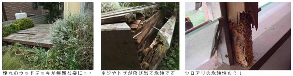 天然木腐食 シロアリ